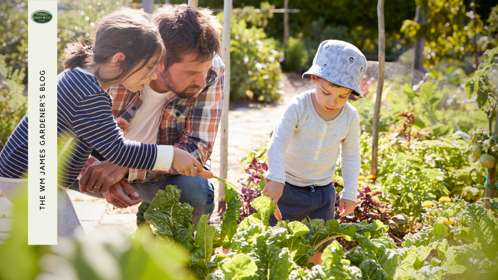 How To Create A Fun Vegetable Garden For Kids