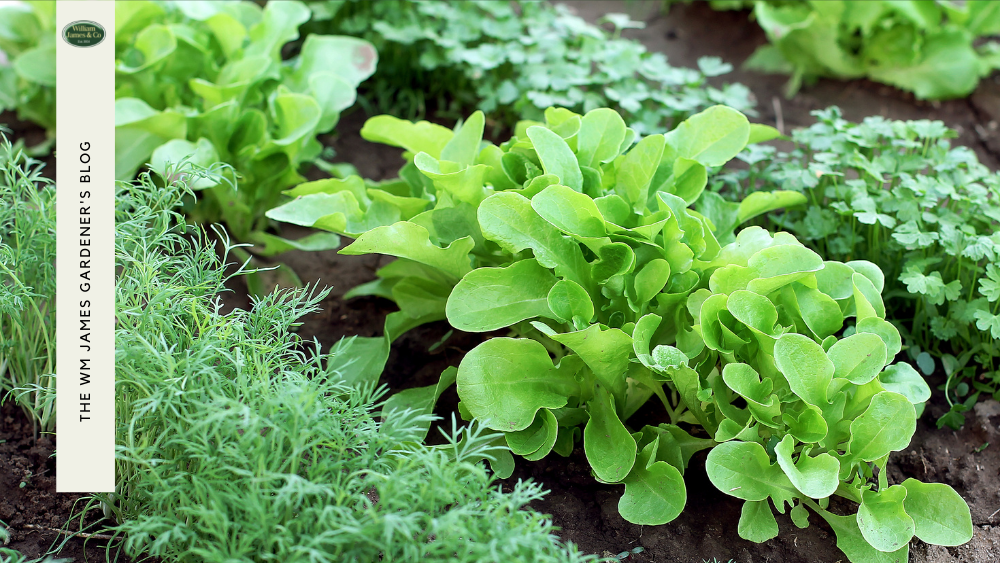 Vegetable Planting Monthly Calendar: When To Plant Vegetables