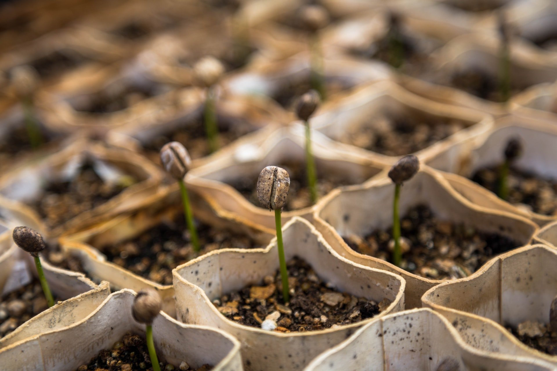 What To Do After Seeds Sprout - Growing Your Own Vegetables