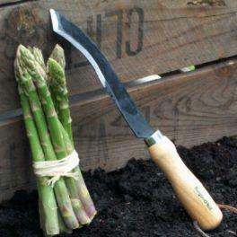 Image for Asparagus Knife