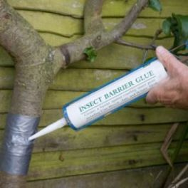 Image for Insect Barrier Glue