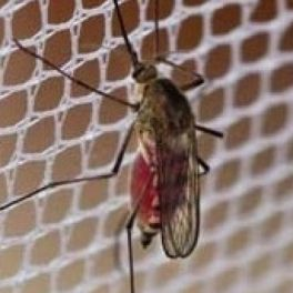 Image for Ultra Fine Mesh Insect Protection Netting - Per Metre