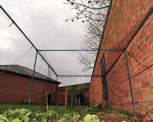 vegetable cage inside