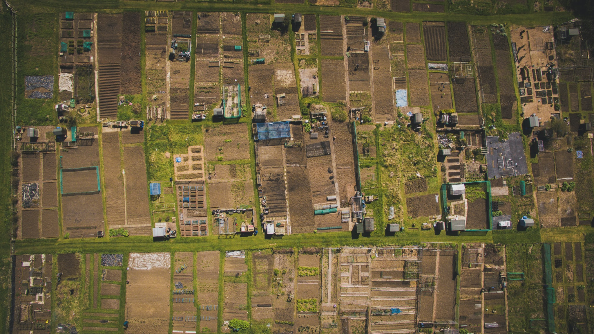 Allotments for Beginners: How to Get an Allotment
