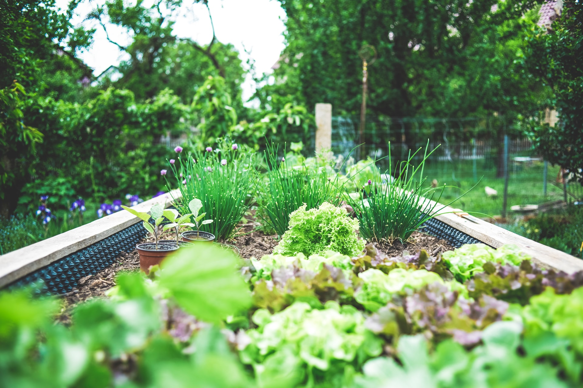 15 Garden Vegetable Protection Tips for Budding Growers