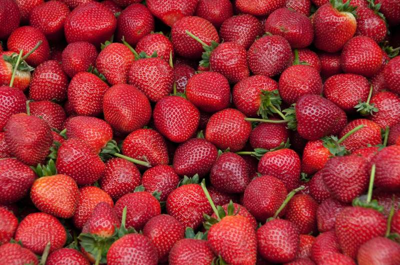 Get Started With Strawberry Growing