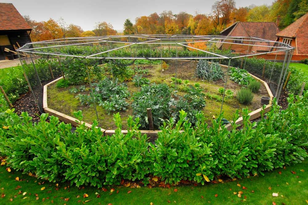 4 Insider Tips For Vegetable Garden Planting Success