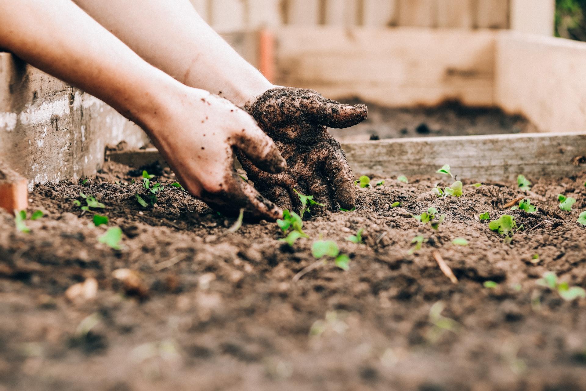 5 Simple Ways To Find Vegetable Garden Ideas & Inspiration