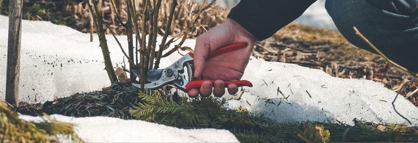 Winter Gardening Tools & Equipment