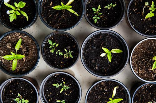 Greenhouse & Planting Tools