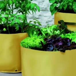 Image for Vegetable Patio Planters