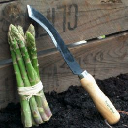 Image for Asparagus Knife