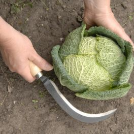 Image for Vegetable Harvesting Knife