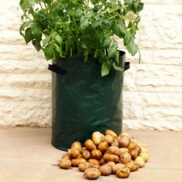 Image for Potato Patio Planters