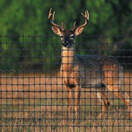 Image for Heavy Duty Deer Netting - Per Metre