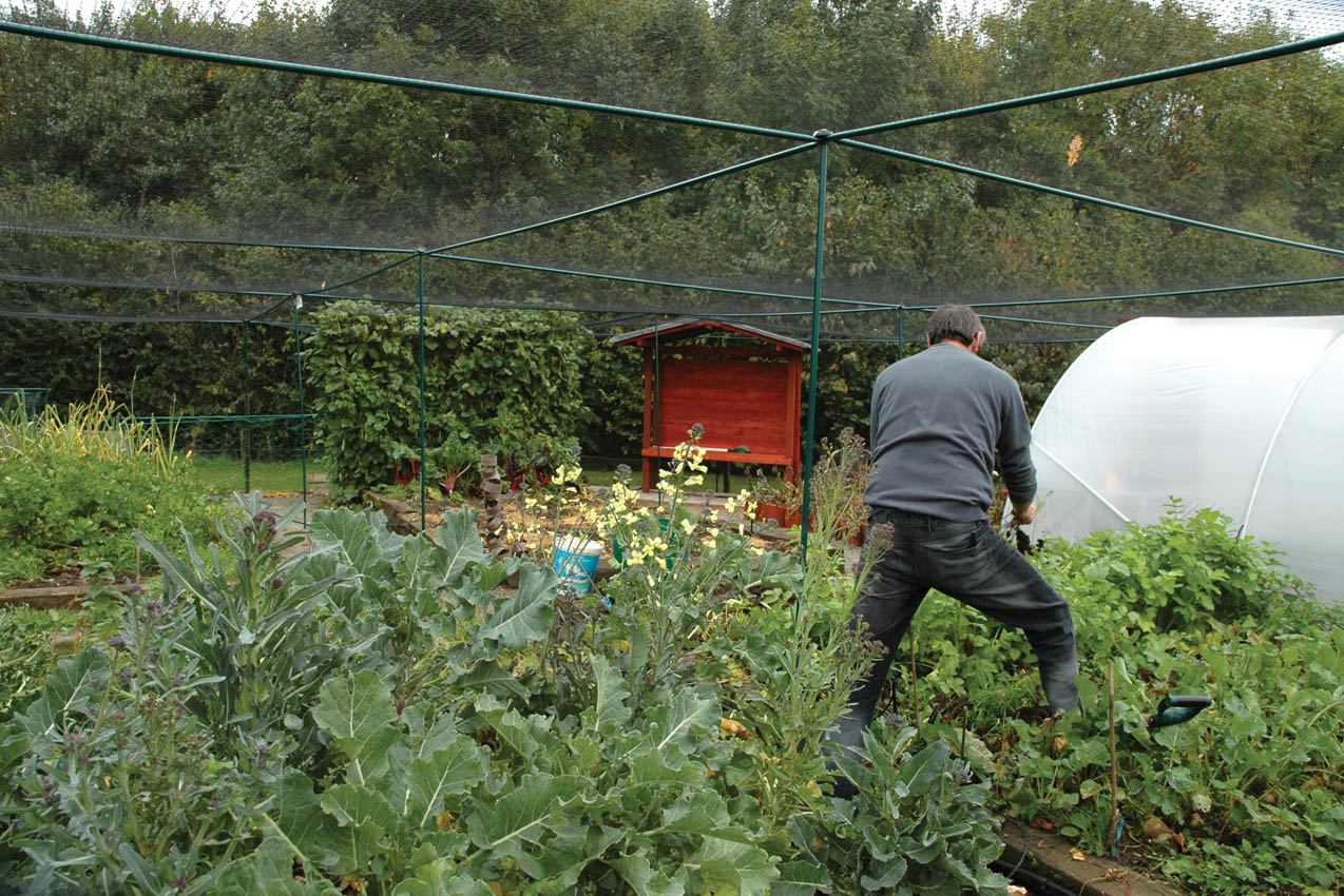 Working inside Classic Steel Fruit Cage, Red Hill Farm, Coventry