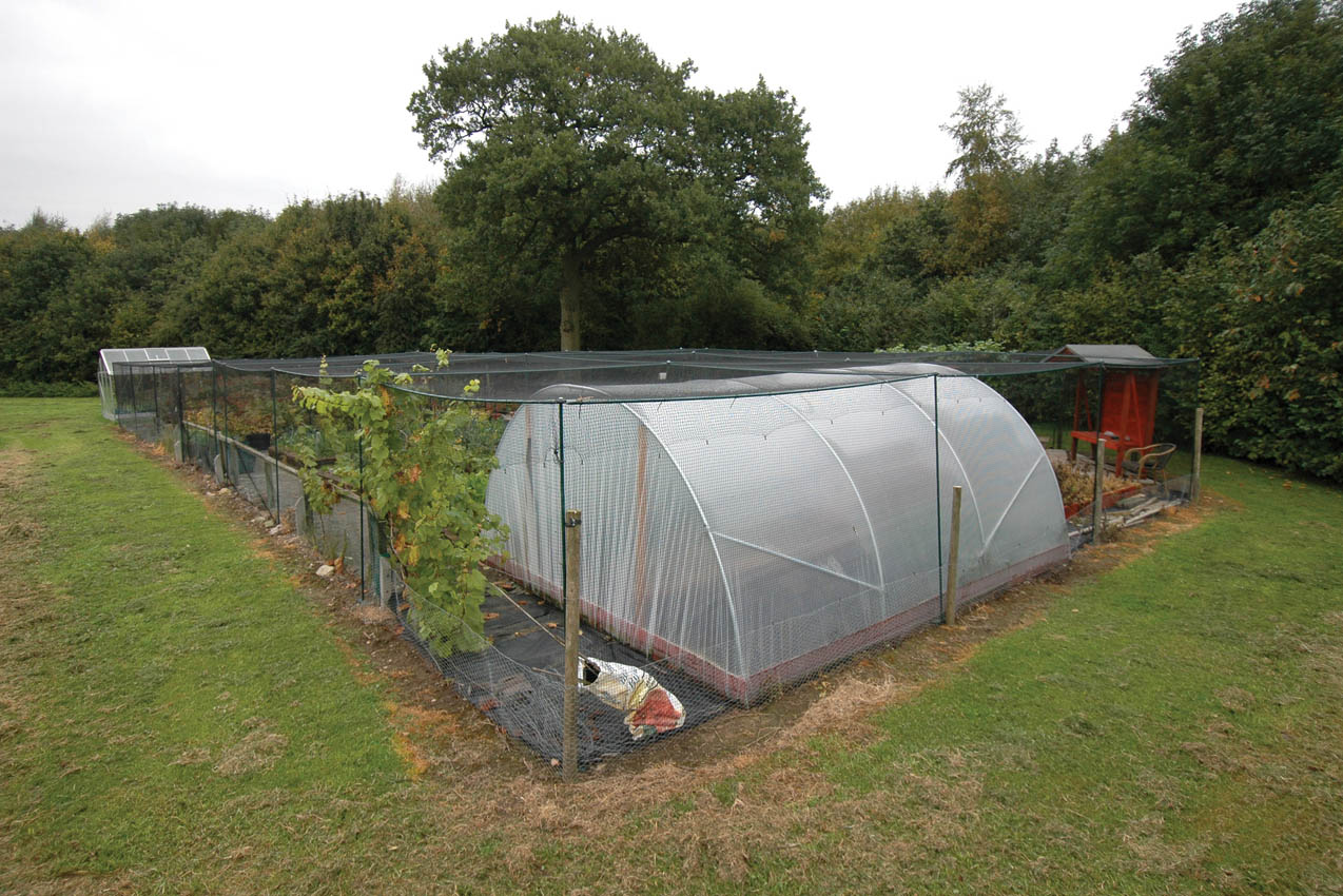 Classic Steel Fruit Cage, Red Hill Farm, Coventry