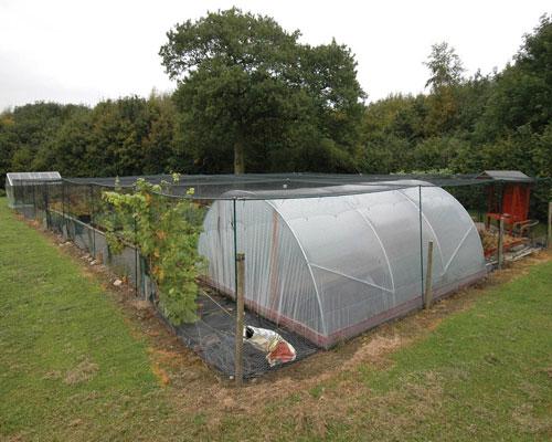 allotment fruit cage