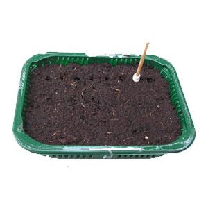 seeds not growing