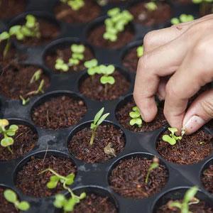 plants growing slowly