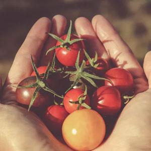 vegetable garden not producing
