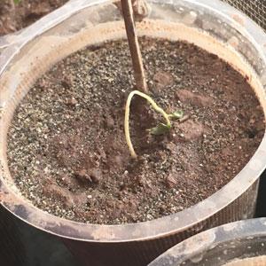 vegetable garden not producing weak plants